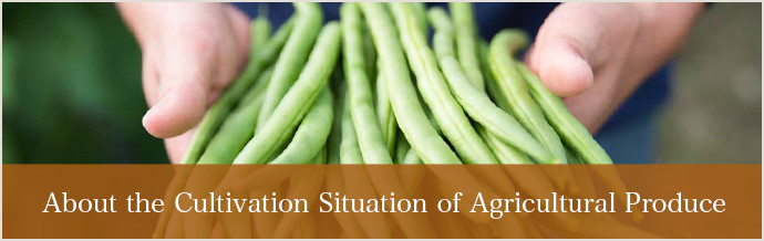 About the Cultivation Situation of Agricultural Produce
